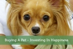 Buying A Pet - Investing In Happiness