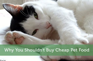 Why You Shouldn't Buy Cheap Pet Food