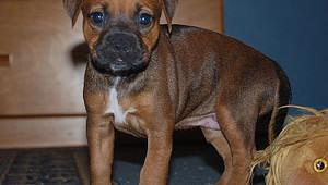 random-puppy