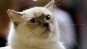 glaring-cat
