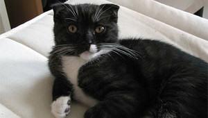 weird-cat