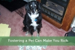 Fostering a Pet Can Make You Rich