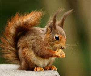 funky-squirrel