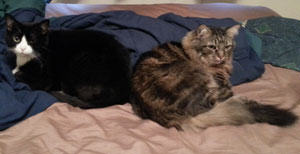 cats-on-bed
