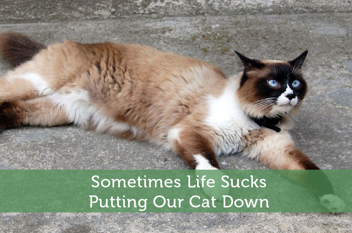 Sometimes-Life-Sucks---Putting-Our-Cat-Down