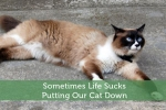 Sometimes Life Sucks - Putting Our Cat Down