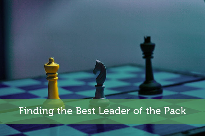 Finding-the-Best-Leader-of-the-Pack