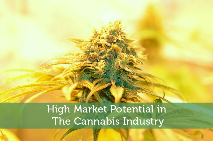 High Market Potential in The Cannabis Industry