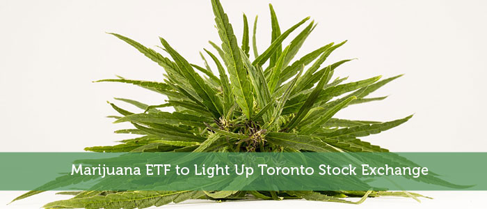 Marijuana ETF to Light Up Toronto Stock Exchange