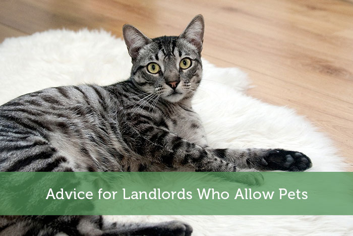 Advice for Landlords Who Allow Pets