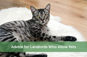 Adam-by-Advice for Landlords Who Allow Pets