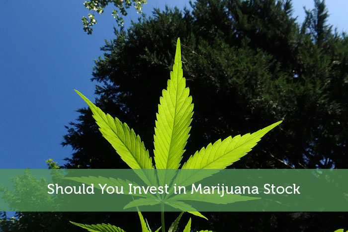 Should You Invest in Marijuana Stock