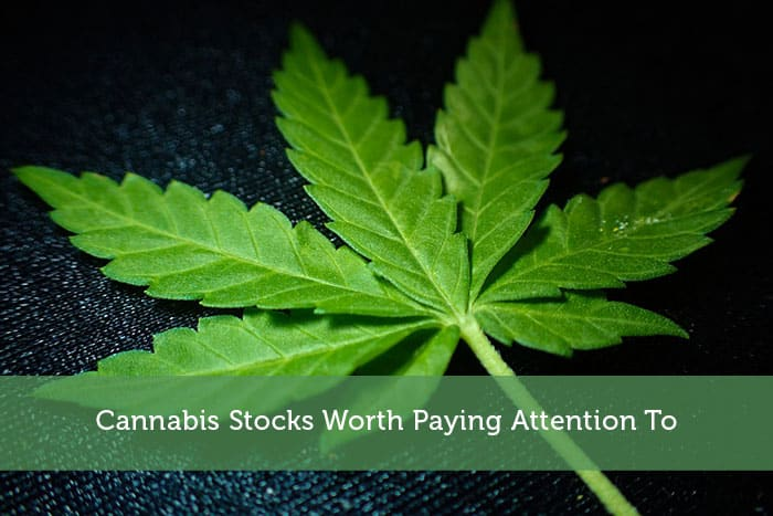 Cannabis Stocks Worth Paying Attention To